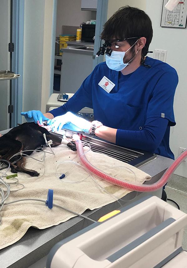 Pet Dental Care in Lake Havasu City, AZ